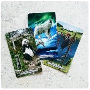 Animal Totem Tarot 4