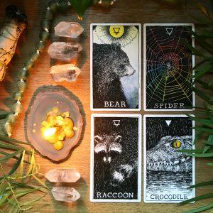 Animal Spirit Deck and Guidebook 6